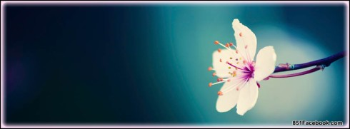 seasons-spring-tree-blossom-blossoms-flowers-pink-white-best-top-free-facebook-timeline-cover-banner-for-fb-profile